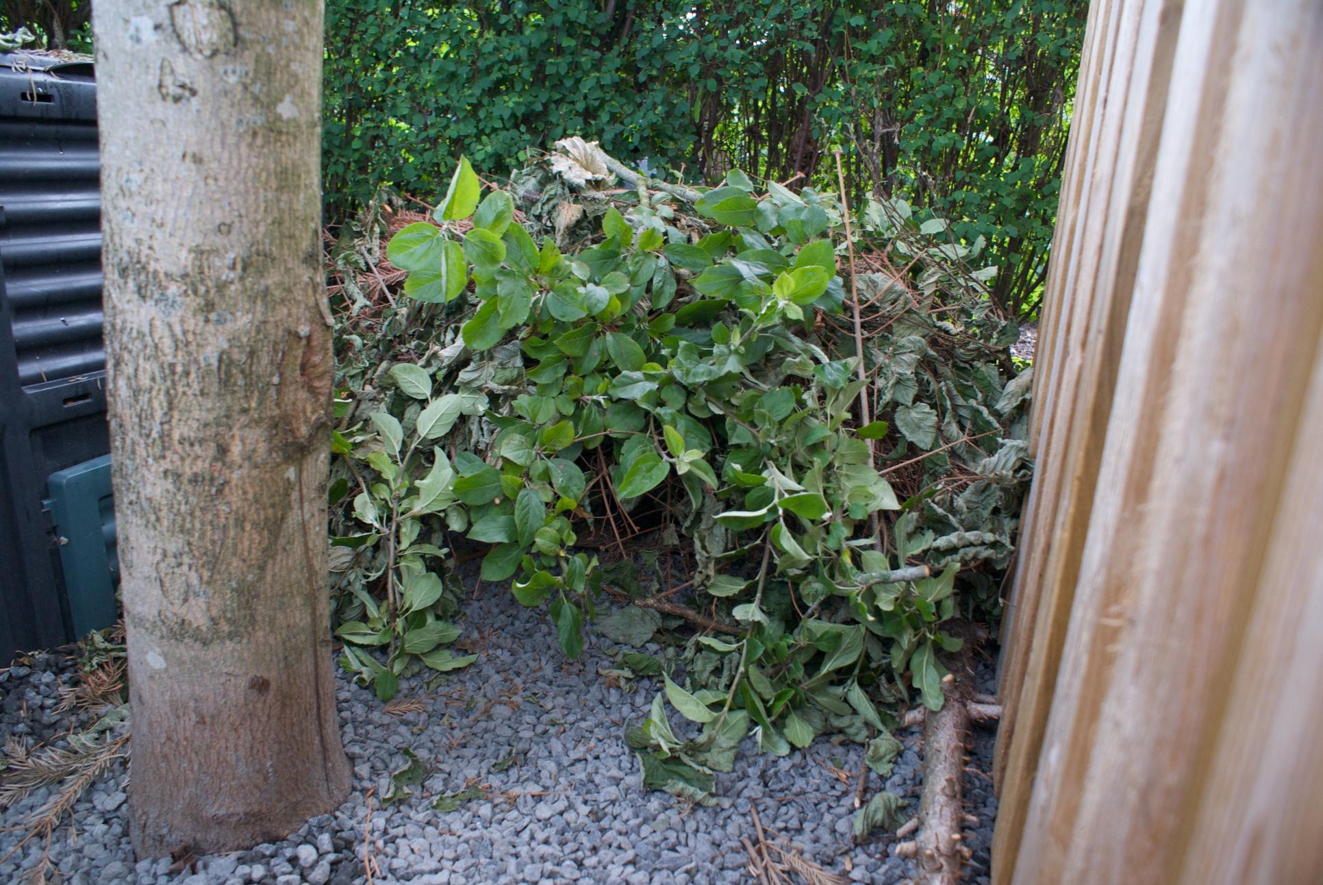 pindsvin i haven